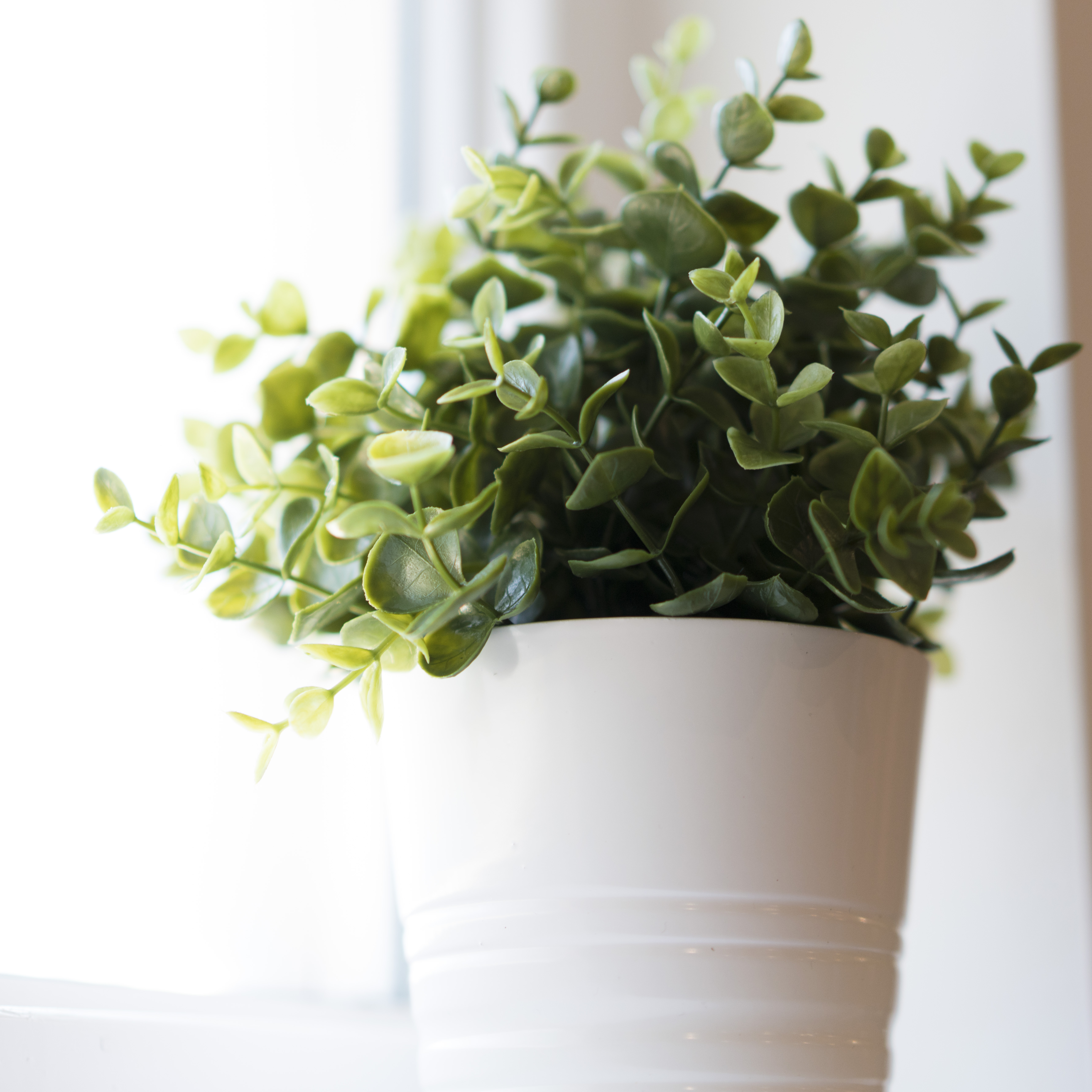 Plant in a pot near a window